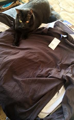 Squirly the cat likes H&M-Streetzblog