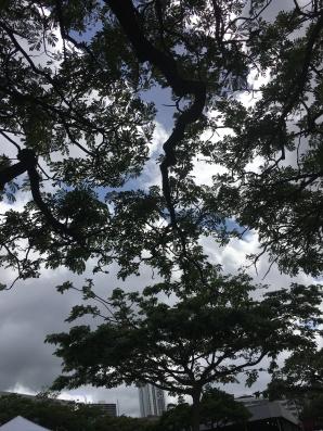 The Hawaiian Sky